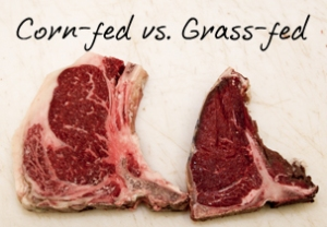 grass, fed, beef, corn, wheat, paleo, chatham, livingston, nj, new jersey, millburn, short hills, florham park, real food
